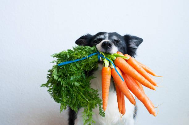Dog holding carrots