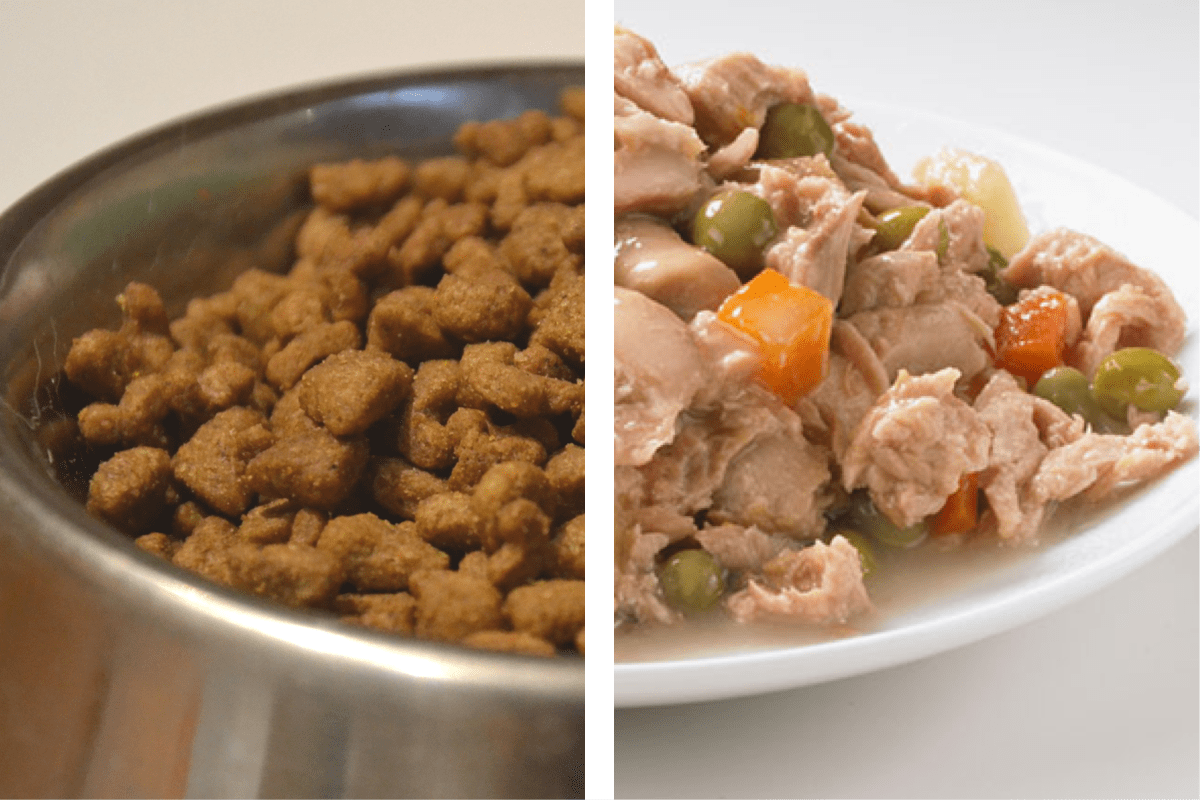 Dry and wet dog food in a bowl