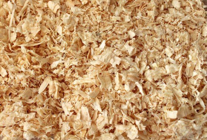 Soft wood shavings as hamster bedding