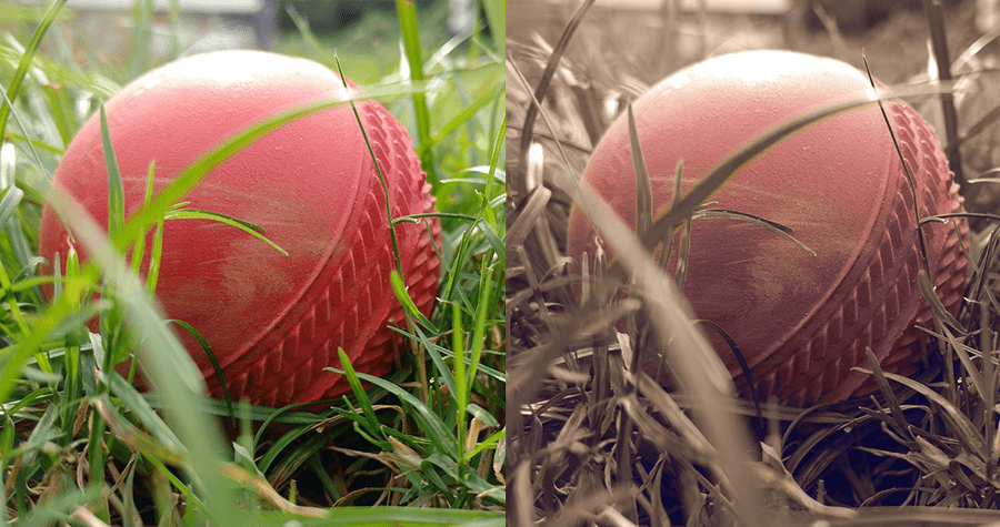 Possible view of how dog sees the world with red ball in green grass