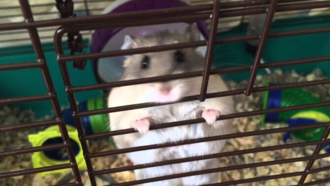 Small rodent climbing cage bars
