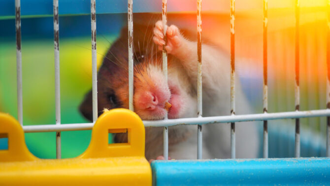 Rodent biting cage bars