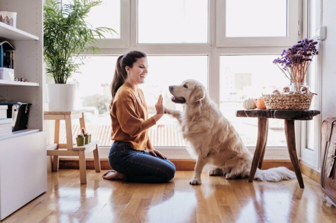 Beautiful woman doing high five her adorable golden retriever dog at home
