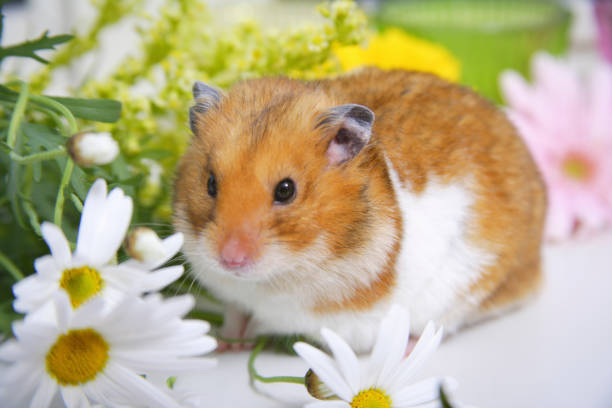 Spring in the hamster