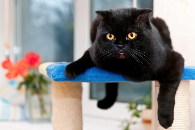 photo of black cat lying on cat tree