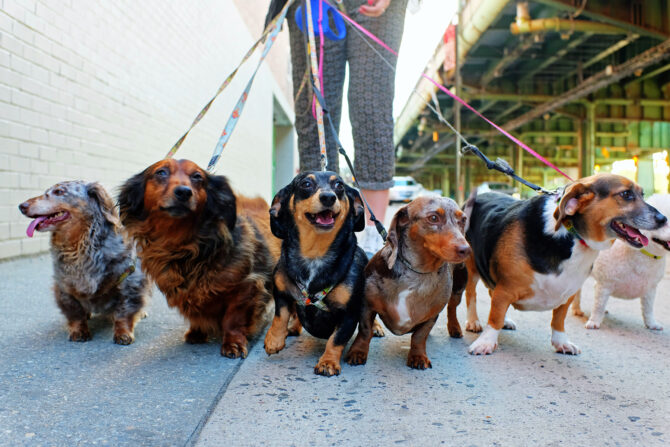 photo of dogs on leashes