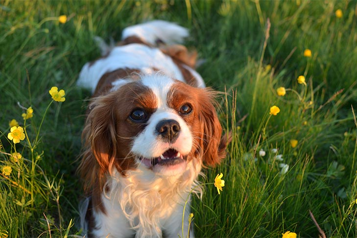 Dog Quotes: Best Quotes About Puppies