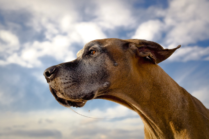 5 Poems to Help Mourn the Loss of a Dog