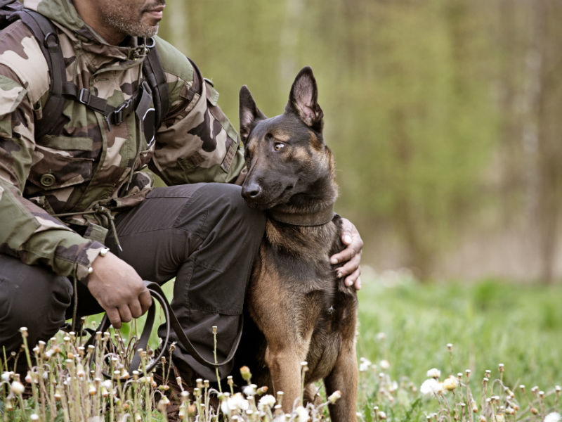 Best Books About Military Dogs