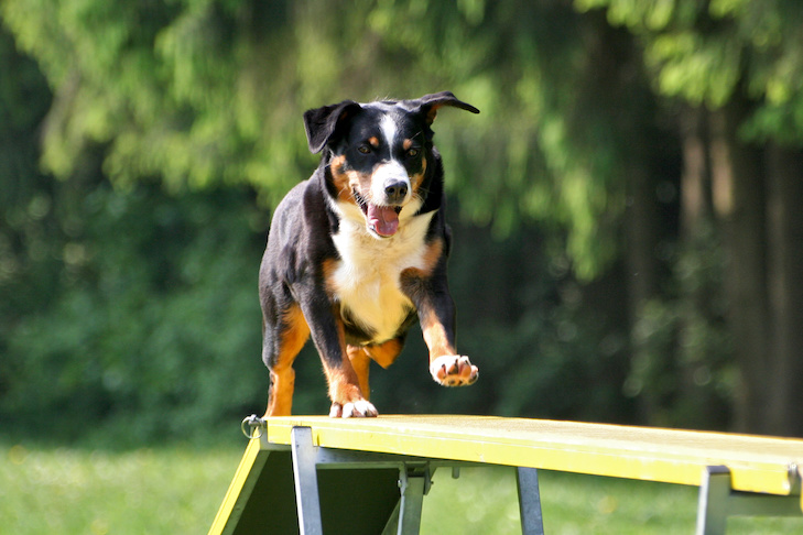 Get Started in Dog Sports and Events