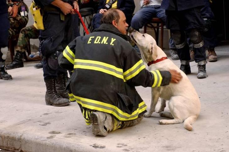 'My Dog Kept Me Sane': How 9/11 Redefined Therapy Dogs