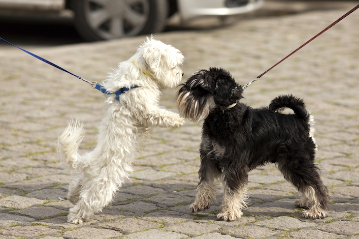 How to Manage a Dog Lunging on Leash